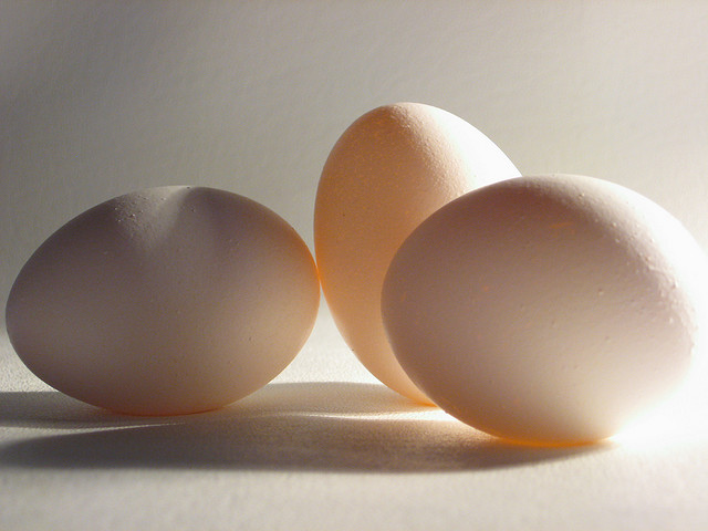 The Essence of Egg