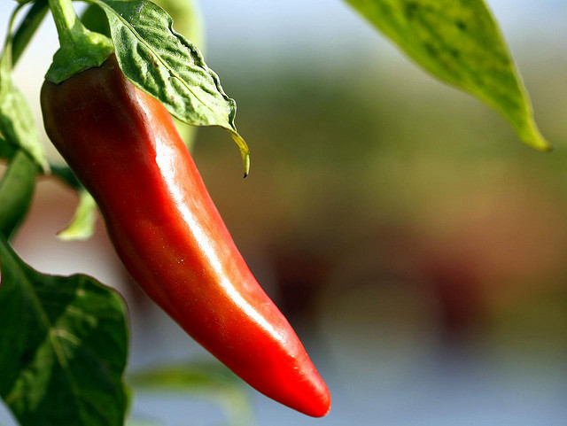 Long Term Effects Of Eating Spicy Food