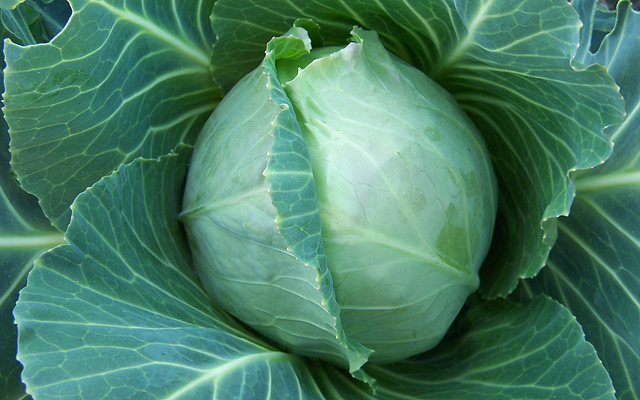 Iheartubuntu Cabbage